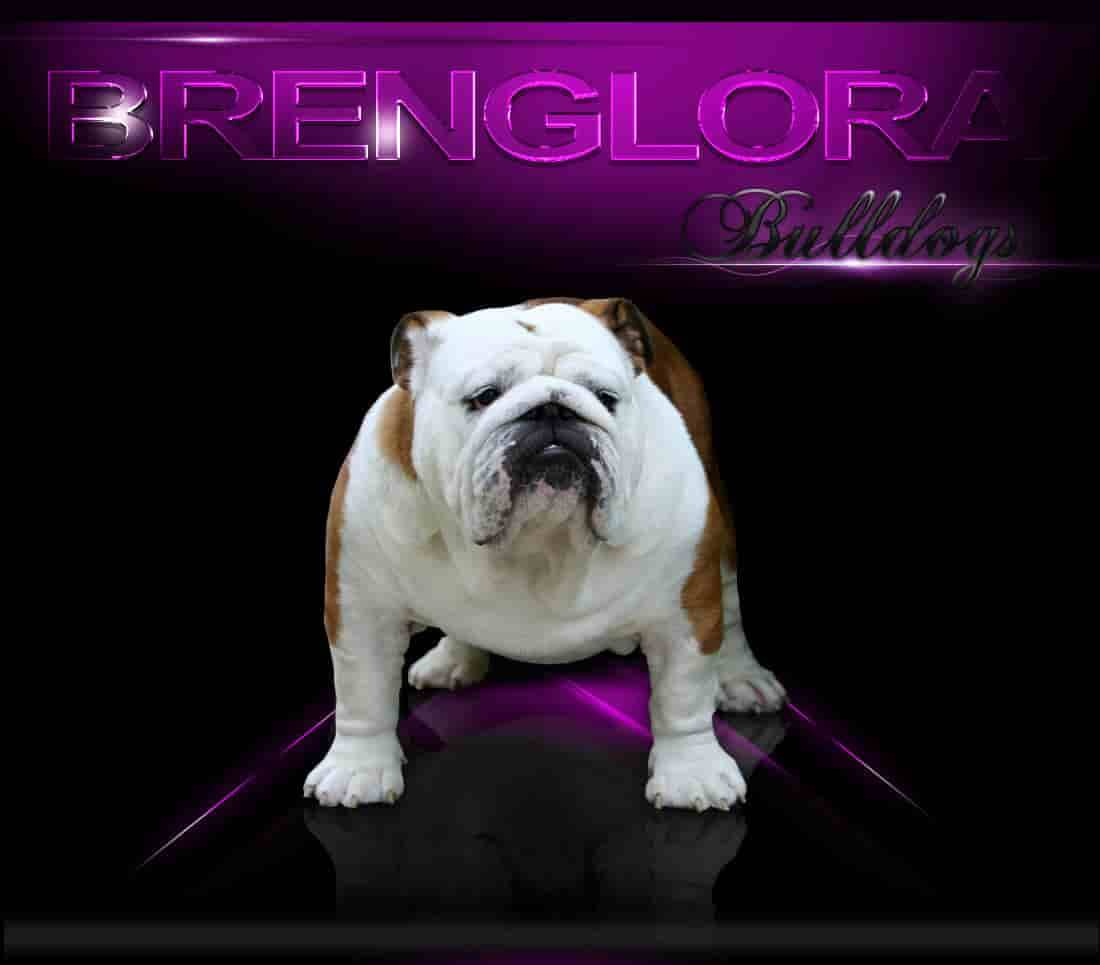 Welcome To Brenglora Bulldogs