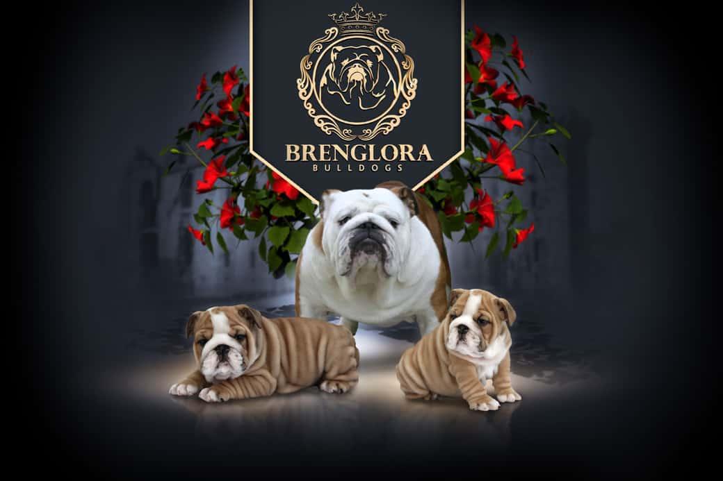 Brenglora Bulldogs